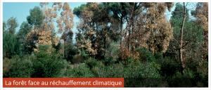 image foret face au changement climatique