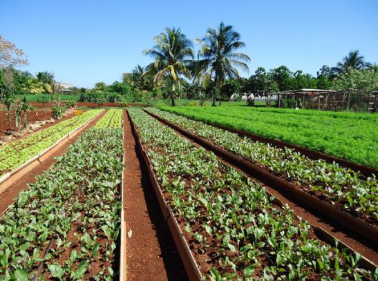 Découverte et analyse de la durabilité des systèmes agraires cubains